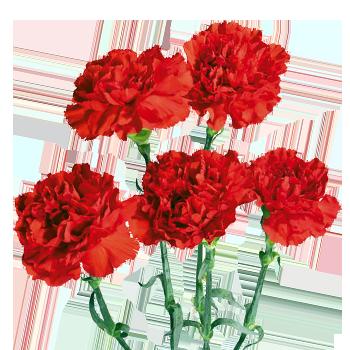 Купить гвоздику цветы где купить цветы дешево в тюмени