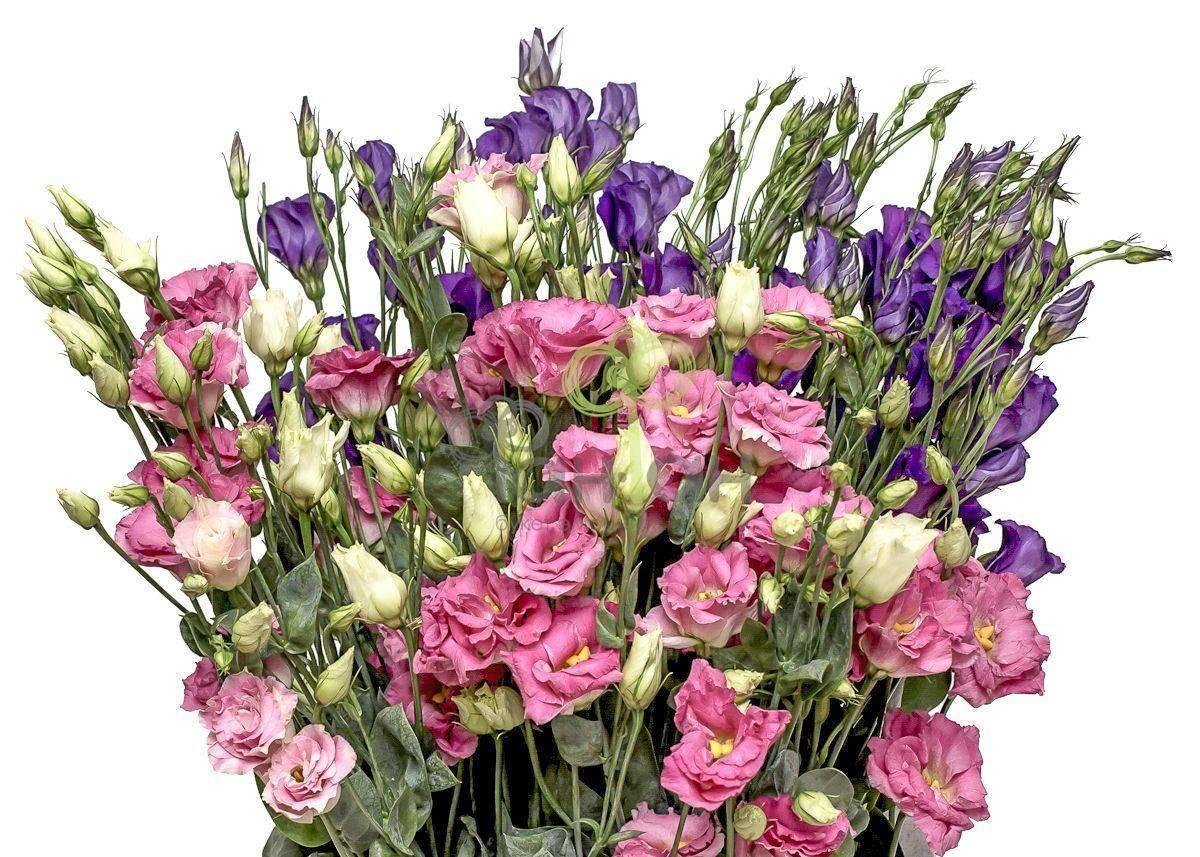 Пермь доставка цветов рф